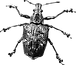 beetle grainy compressed.png