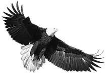 eagle 2 grain.png
