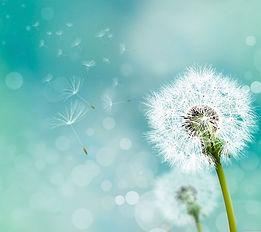 rocio dandelion.jpg