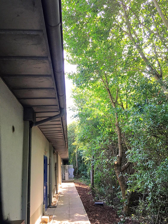 Lidl tree works