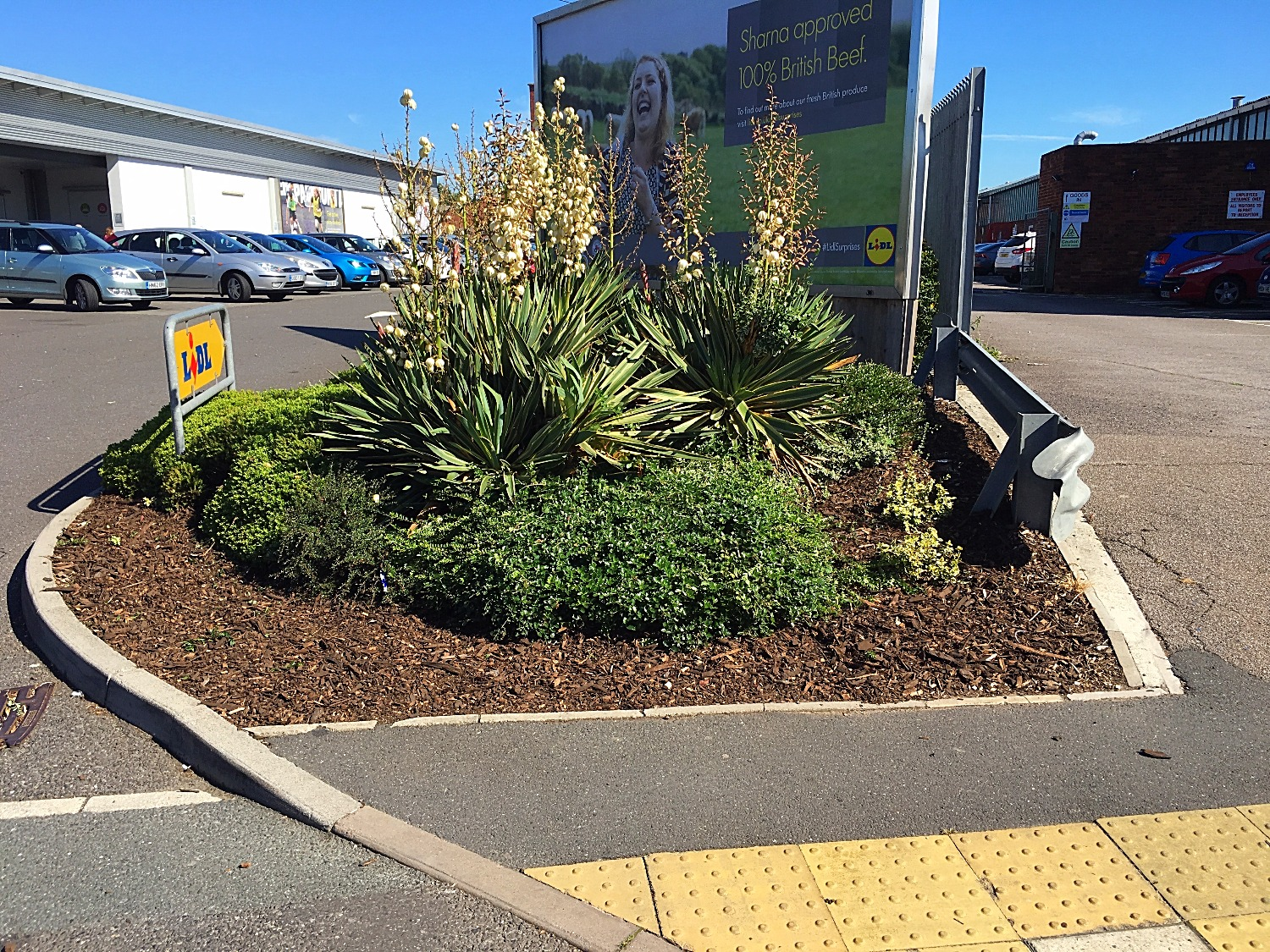 greenscape work at Lidl