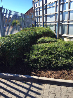 greenscape work at Lidl