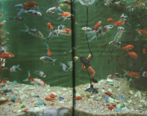 Calle_Blind_fish2.jpg