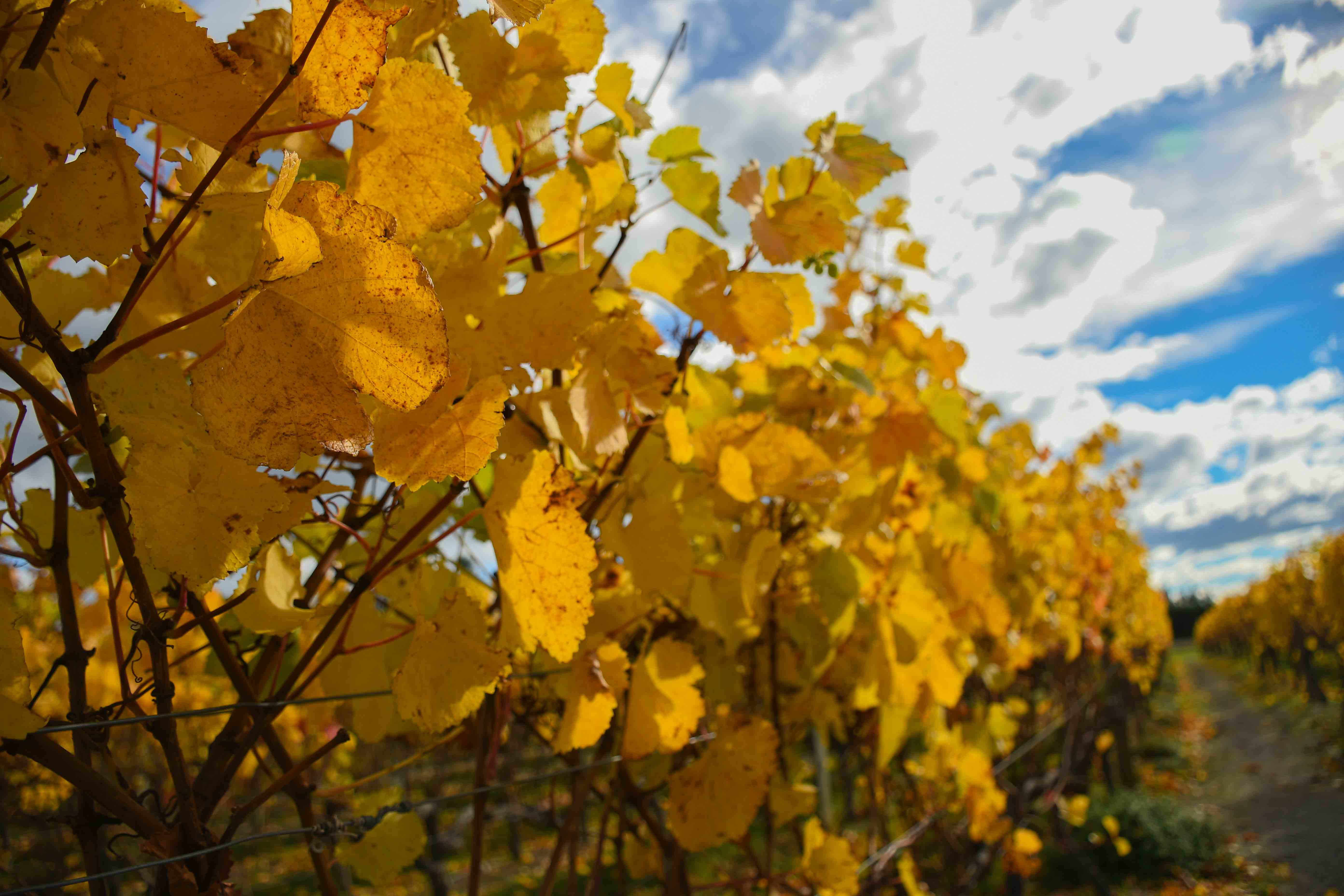 Environmentally friendly wine tours