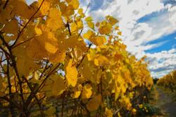 Environmentally friendly wine tours