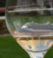 cruise wine tour.jpg