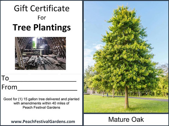 Tree Planting Certificate- Oak
