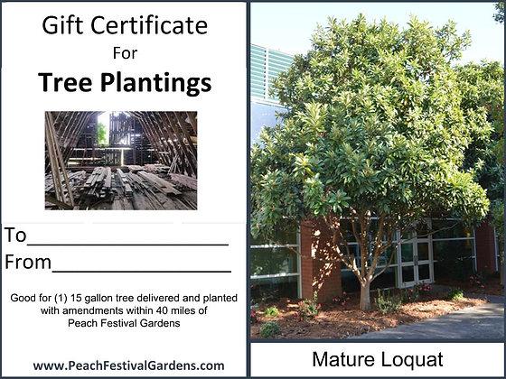Tree Planting Certificate- Loquat