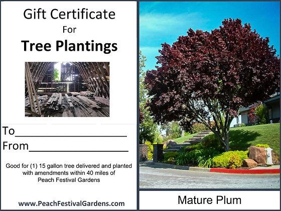Tree Planting Certificate- Plum