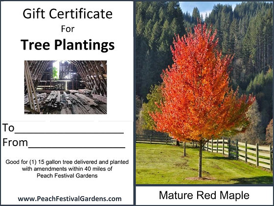 Tree Planting Certificate- Red Maple