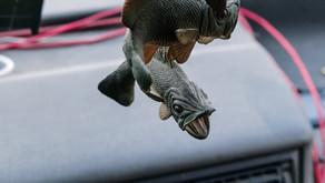 Fish Shit
