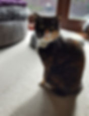 pet sitter in Hedge End Southampton