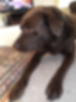 puppy sitter in Hedge End Southampton