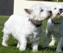 dog walker in hedge end, west end and southampton