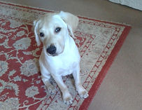 puppy sitting and dog walking southampton, hedge end