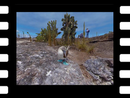 VR: Exotic Wildlife of the Galápagos