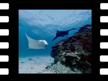 VR Swim with Manta Rays