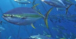 Gestion des stocks de poisson - Une stratégie régionale enfin mise en place - 10/05/2049