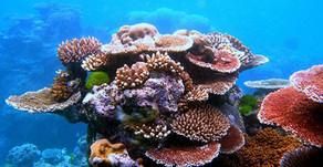 Les nanorobots à la rescousse du corail - 13/05/2049