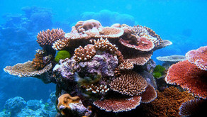 Nanorobots coming to rescue coral reefs - 13/05/2049