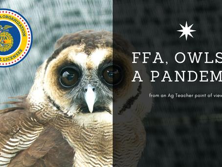FFA, Owls & a Pandemic