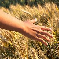 hand-in-grain-small.jpg