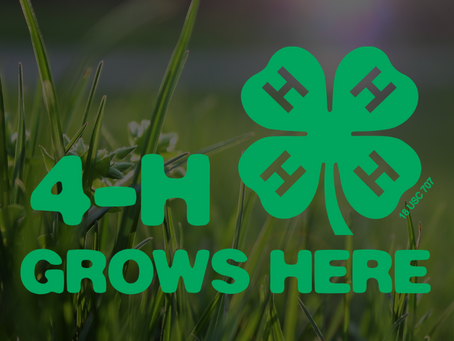 What's the deal with Growing Clover?