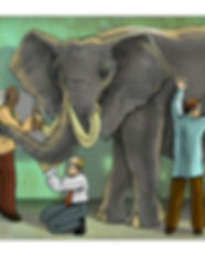 elephant scientist.jpg