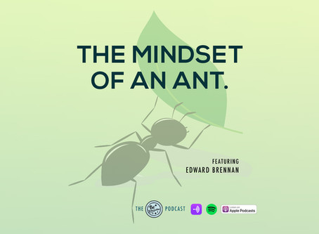 The Mindset of an Ant