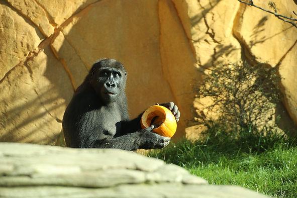 Crédit Photo : Zoo d'Amnéville