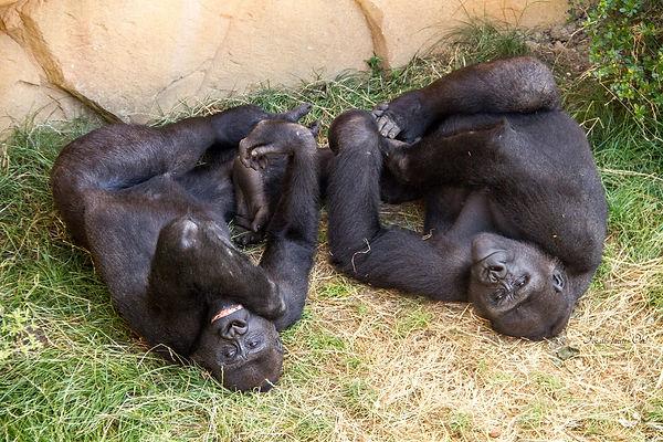 Credit Photo Zoo d'Amnéville