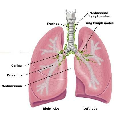 lymph nodes2.jpg