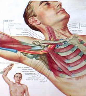 thoracic outlet.jpg