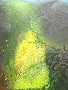 Glyphosat - Pflanzensterben