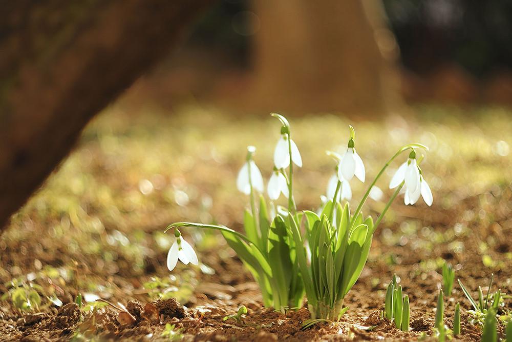 春の気配 自律神経 更年期障害
