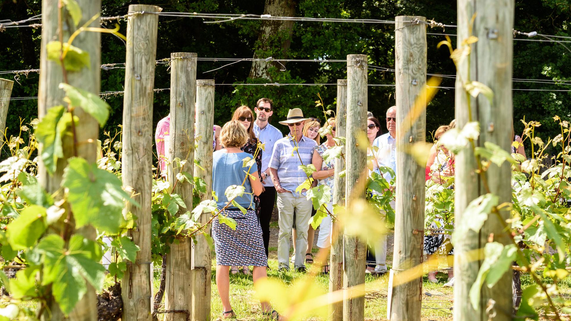 Tour vineyard tamara.jpg