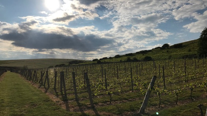 Breaky Bottom vineyard 2019.jpg