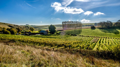 Breaky Bottom vineyard 2.jpg