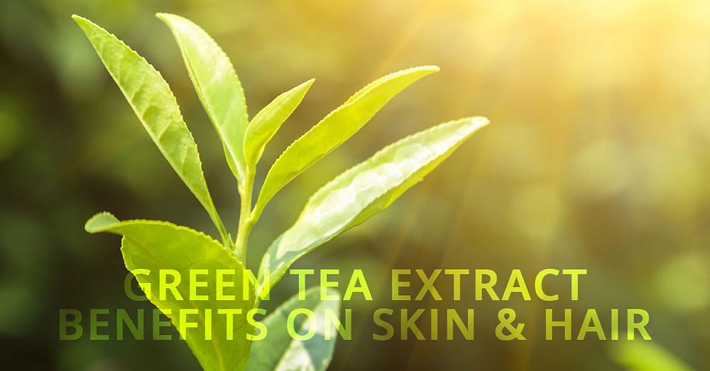 Green Tea Extract Benefits on Skin & Hair