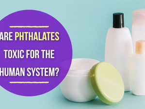 Are Phthalates Toxic for the Human System?
