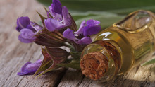 Lavender is Most Versatile of All Essential Oils