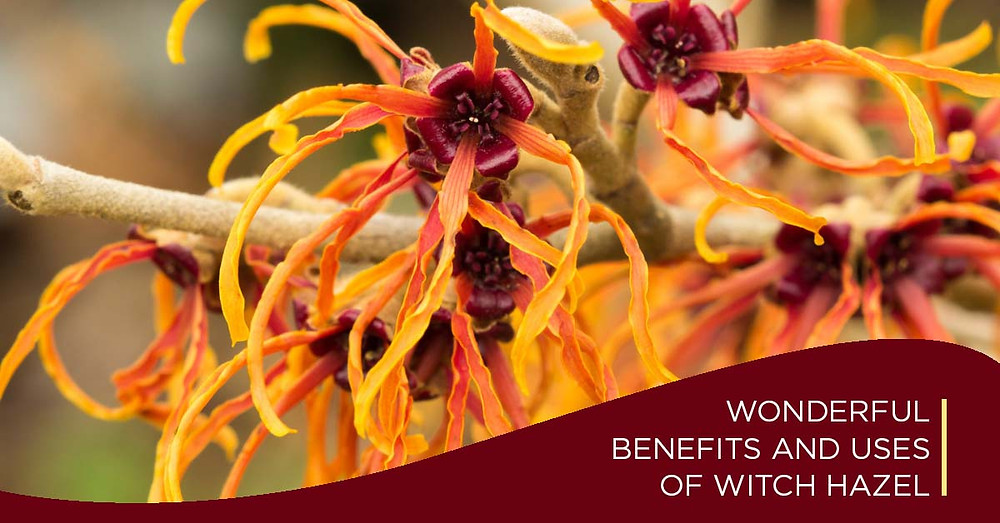 Uses of witchHazel