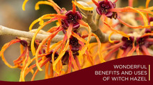 Wonderful Benefits and Uses of Witch Hazel