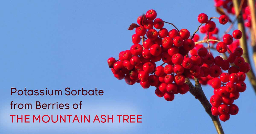 Uses of potassium sorbate from berries of mountain ash tree