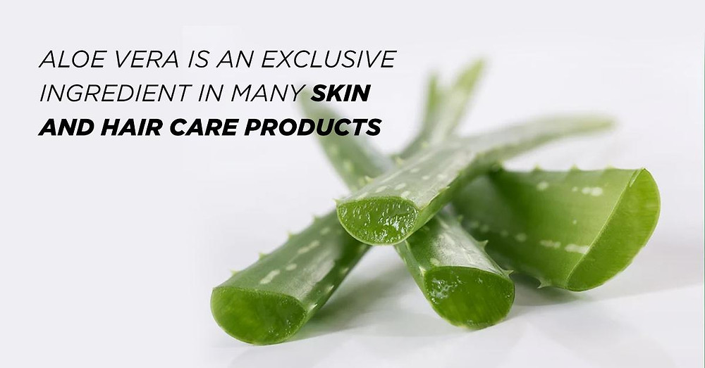 Aloe Vera is an Exclusive Ingredient in Many Skin and Hair Care Products