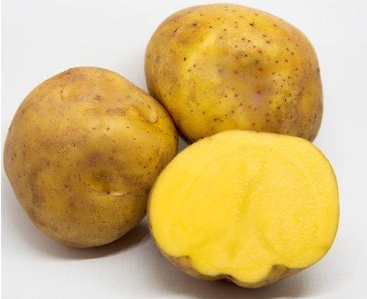 Papa amarilla (3 und aprox)