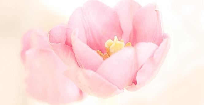 flower-0414_watercolor c.jpg