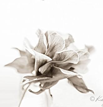 flower-06480 c.jpg