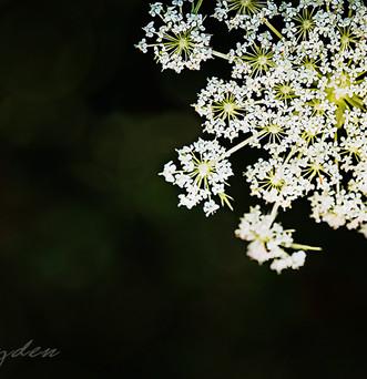 flower-9781 c.jpg