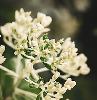 flower-9741 c.jpg